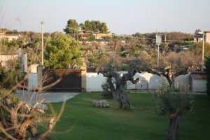 Villa Chiarita Villa w pool Puglia26