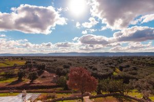 Luxury Masseria Torre Abate Risi Puglia by BeeYond Travel 43