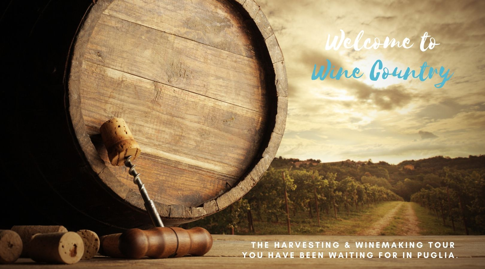 Winemaking Tour by BeeYond Travel