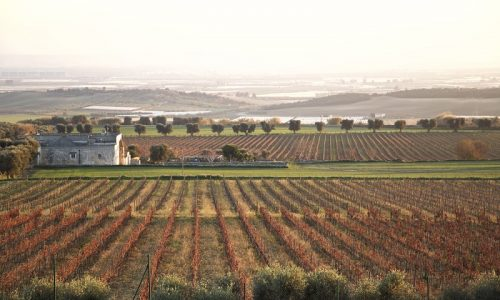 Harvesting and Winemaking Tour by BeeYond Travel